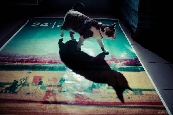ombre de chat