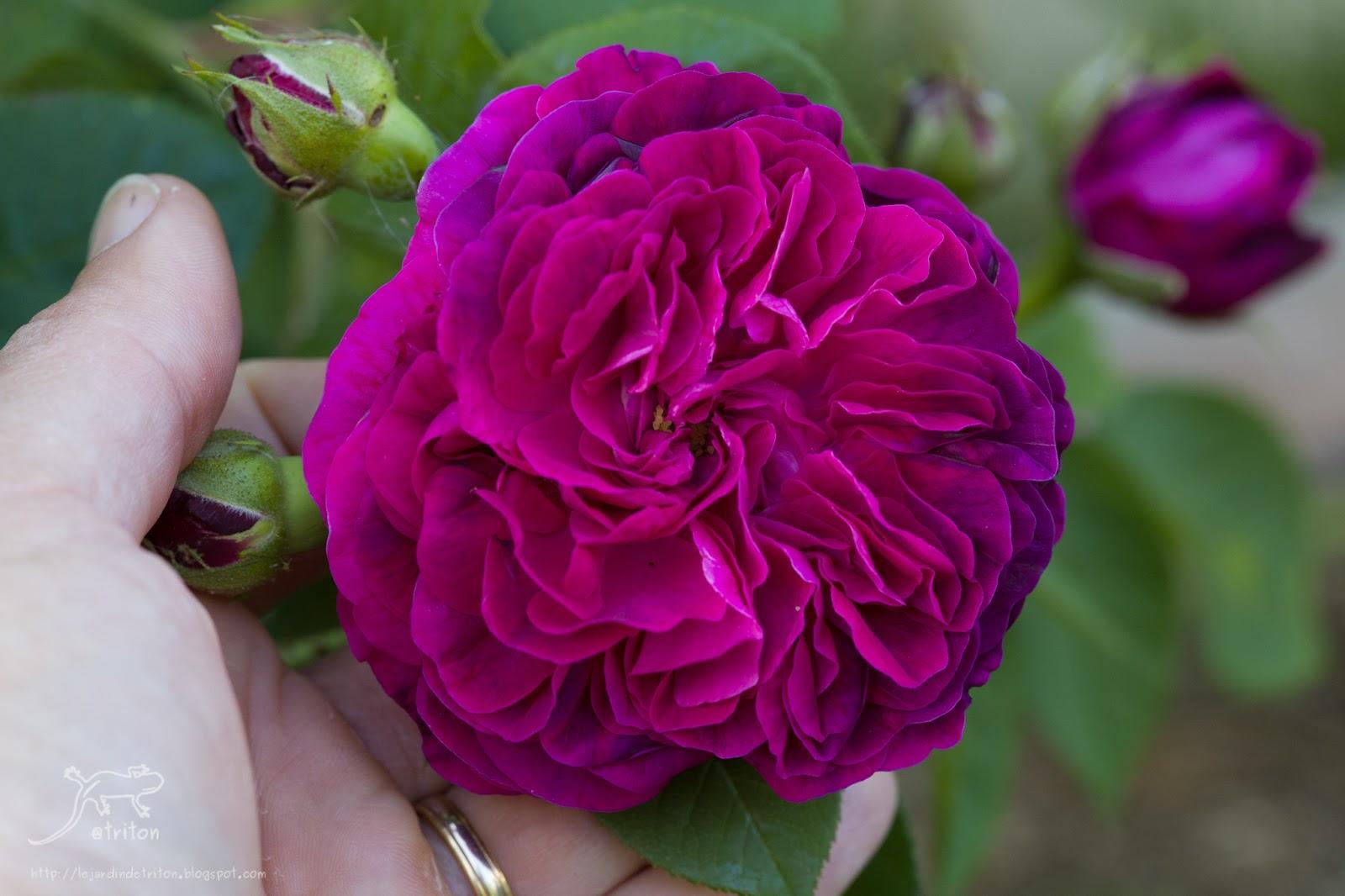 Le Jardin De Triton Mai 2015