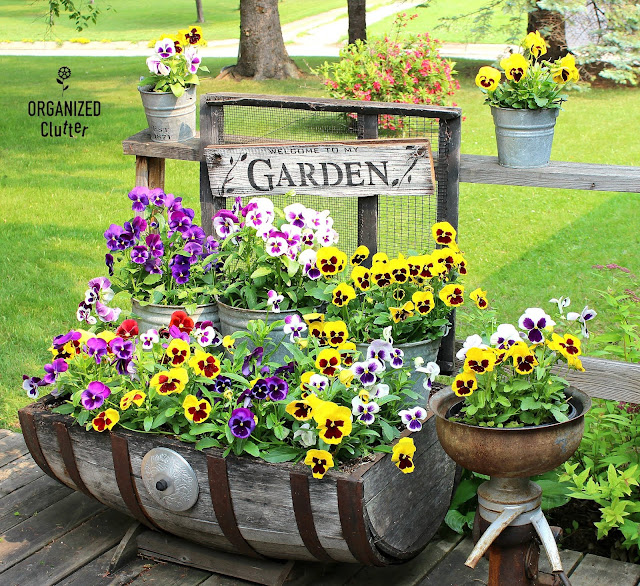 Planting Pansies On The Deck Junk Garden Style #pansies #galvanized #oldsignstencils #junkgarden #stencil #sign #gardensign #containergarden