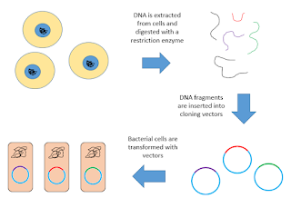 Short Note on cDNA library