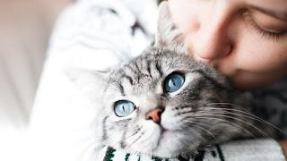 10 señales de que eres una persona felina