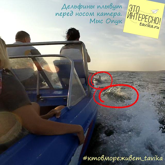 дельфины в Крыму