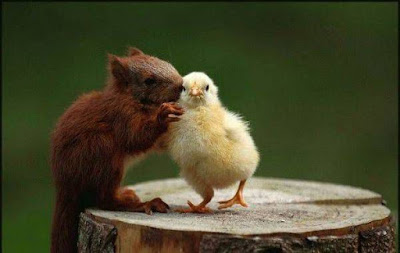 Word in your ear squirrel to bird chick