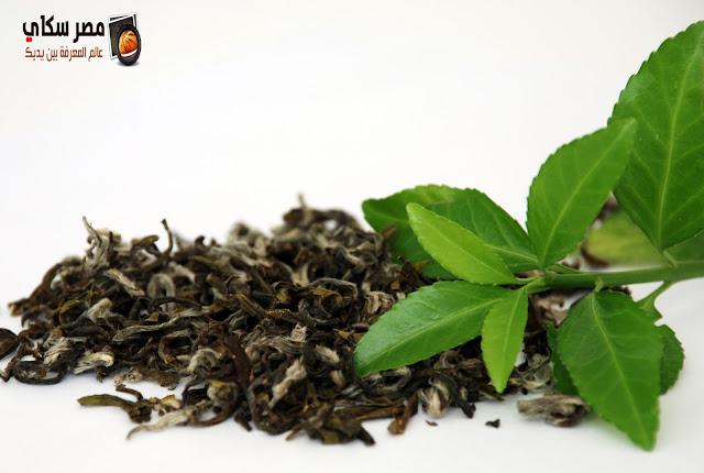 الشاي وأهم فوائدة وأضراره Benefits of Tea