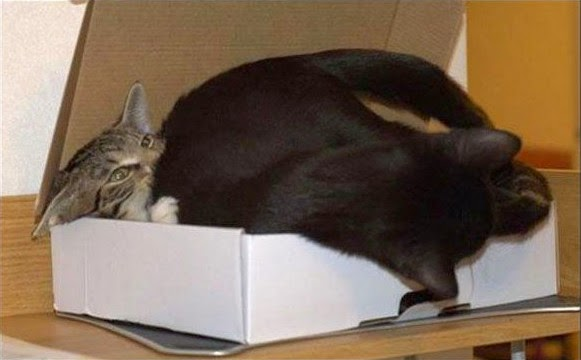 Two cats sleeping arrangement
