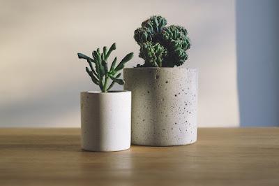 piante-grasse-per-interi