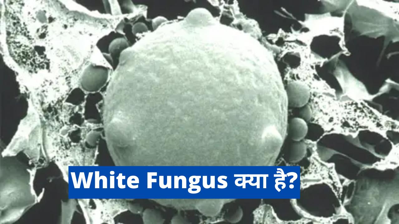 White Fungus kya hai | white fungus के लक्षण