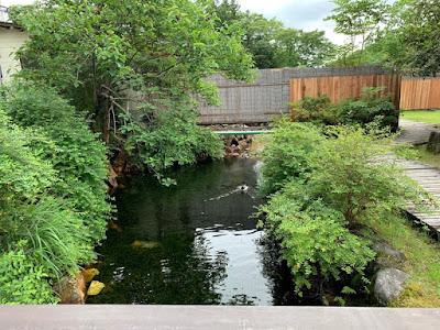 釣り堀につながる池を泳ぐかも