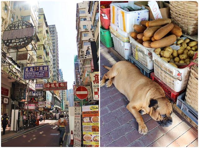 Mongkok, Straßenschilder, dicker Hund