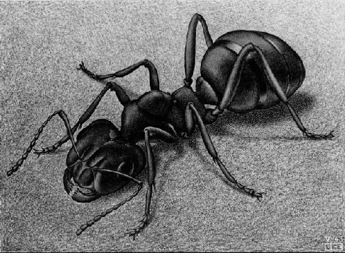 Formiga - Escher, M. C. e suas geniais litogravuras
