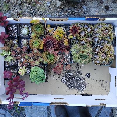 succulents, sedums, Pattern Language plant flowers near seats