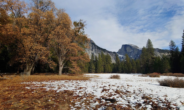 Grassy meadow with light snow cover and Oak trees bearing orange and yellow leaves and Half Dome in the background at Yosemite National Park