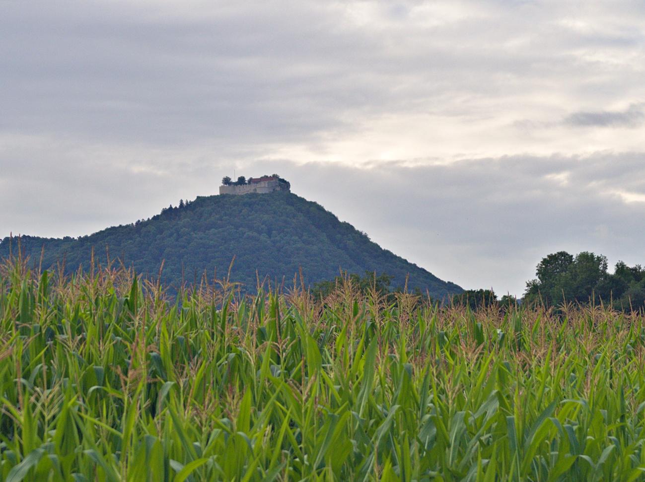 Zum Tagesabschluss — Hohen Neuffen mit Mais unterlegt