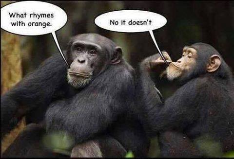 Funny Chimpanzees What Rhymes With Orange