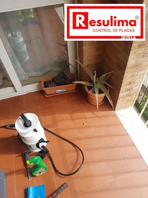 Desinfección de viviendas en Sevilla