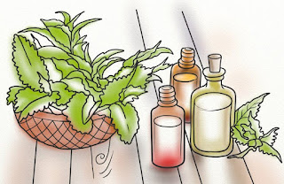 Benefits of Peppermint Essential Oil For Skin