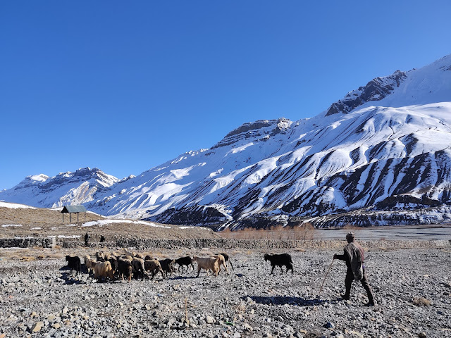 ultimate guide to Spiti Valley kaza