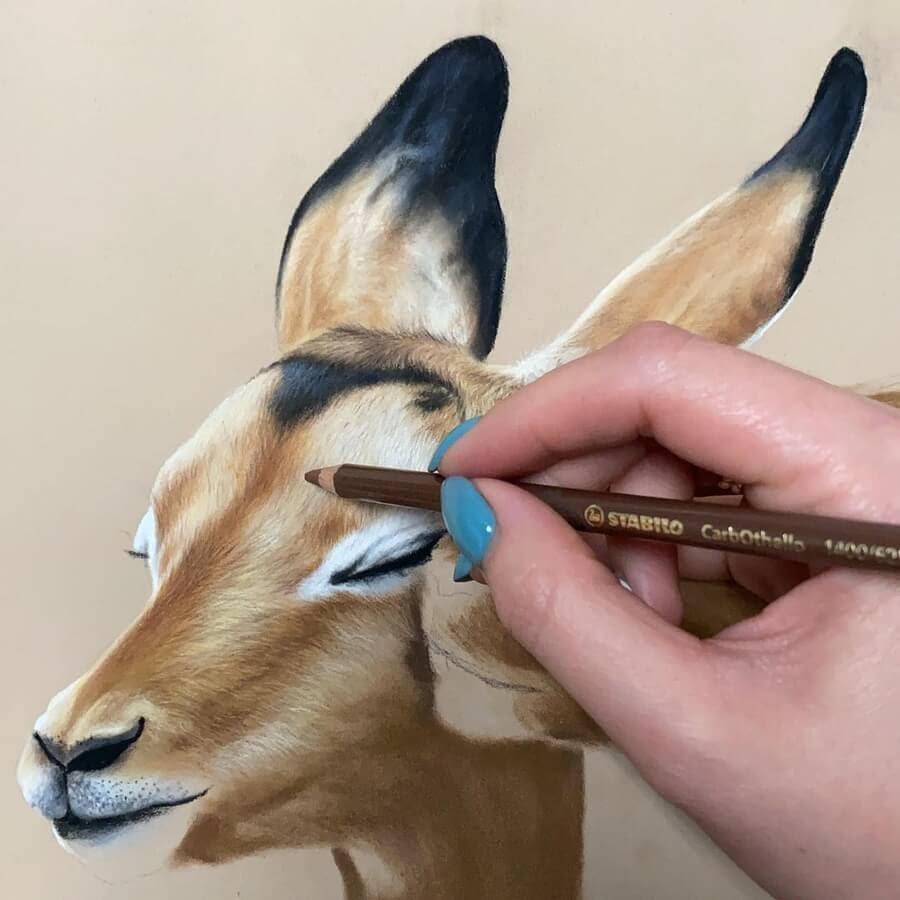 05-Gentle-antelope-Julia-Dubinina-www-designstack-co