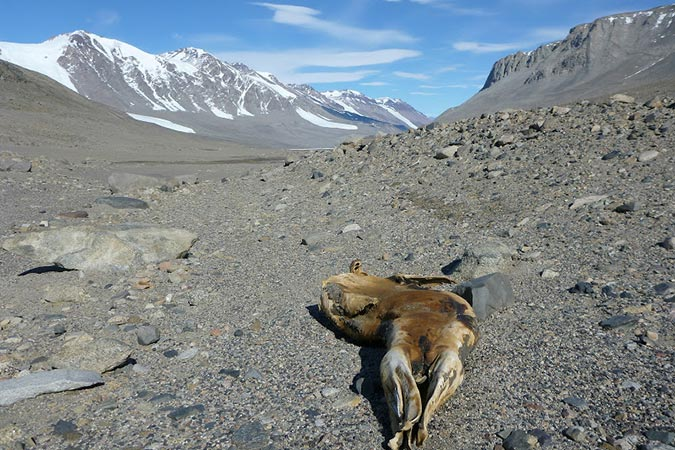 Dlium Dry Valleys on Antarctic continent is the driest place in the world