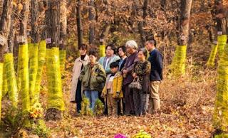 """Rekomendasi dan Sinopsis Film Korea """"Move The Grave"""""""