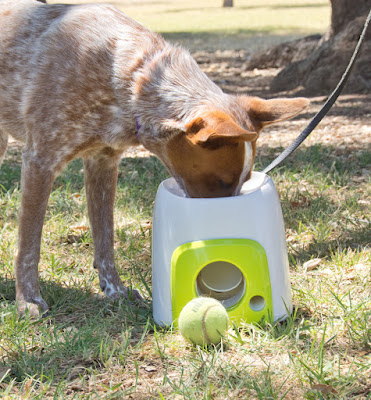 Interactive puzzle food toy for dogs