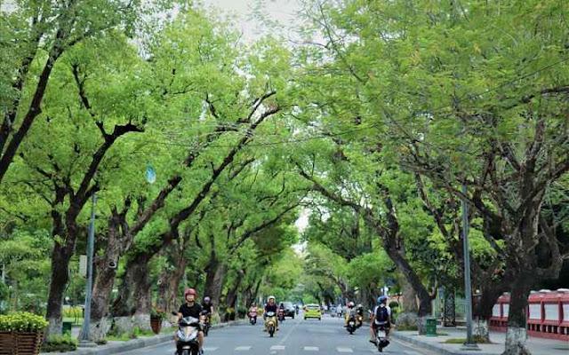 Đến Huế, nhiều du khách thích dạo quanh các cung đường bằng xe máy để tận hưởng không khí trong lành nơi đây. (Ảnh: truyenhinhdulich.vn)