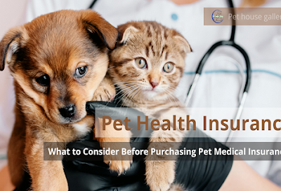Pet Health Insurance - What to Consider Before Purchasing Pet Medical Insurance?