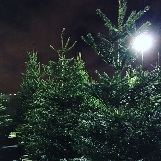 Christmas trees at Pines and Needles store