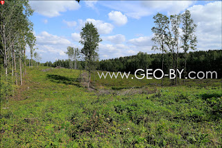 Wojciechowo (Novospask). Deforestation