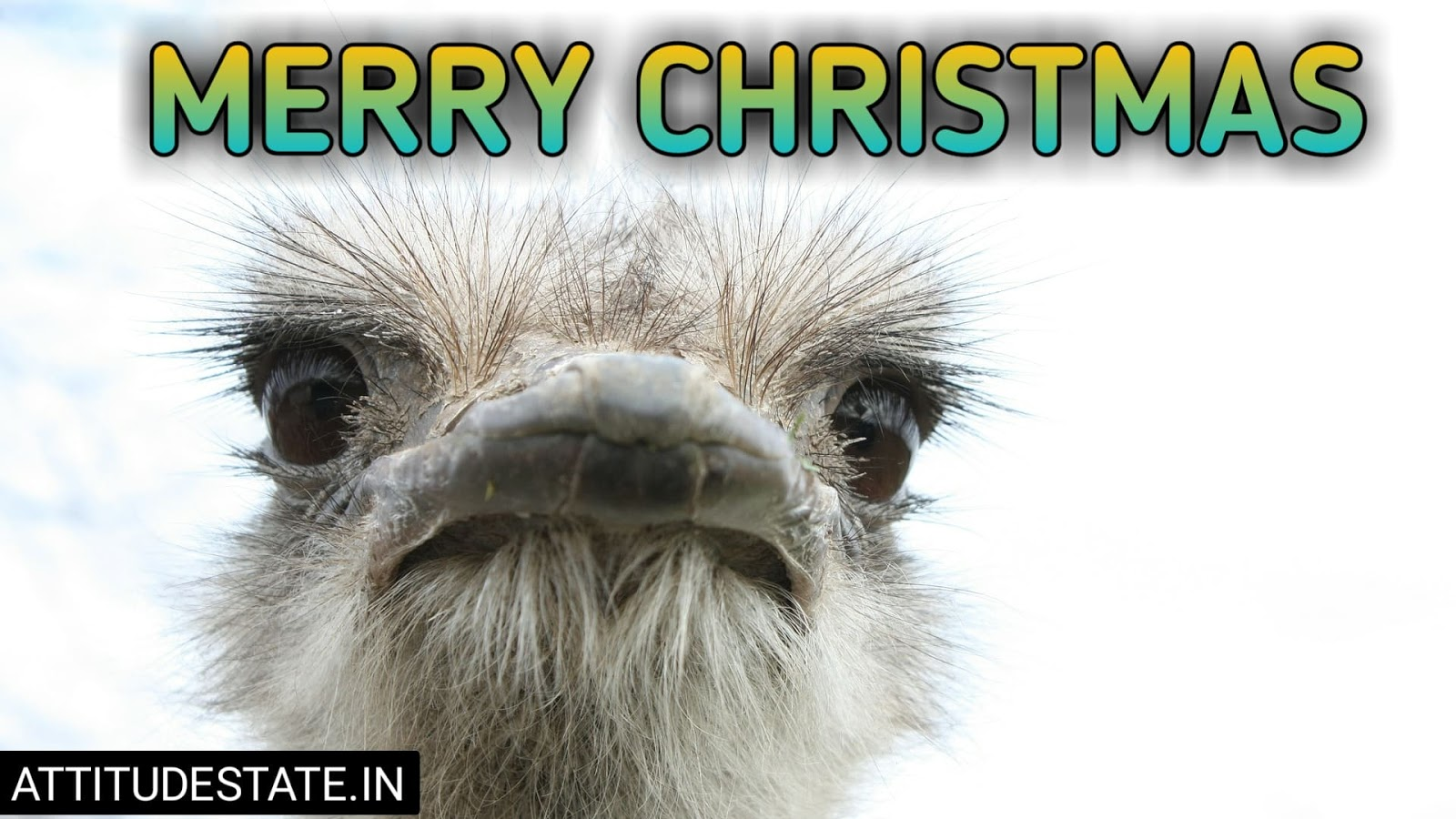 funny merry christmas messages