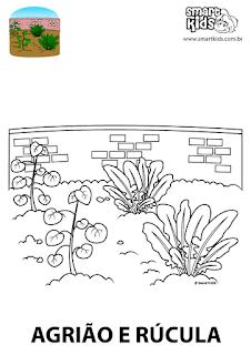 horta de agrião e rúcula