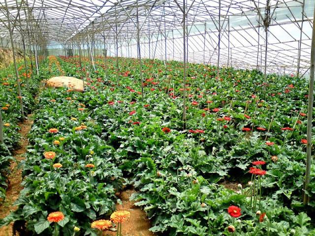 Fresh Garden - Da Lat - ClownVietNam dich vu cung cap xe du lich 0909381581.