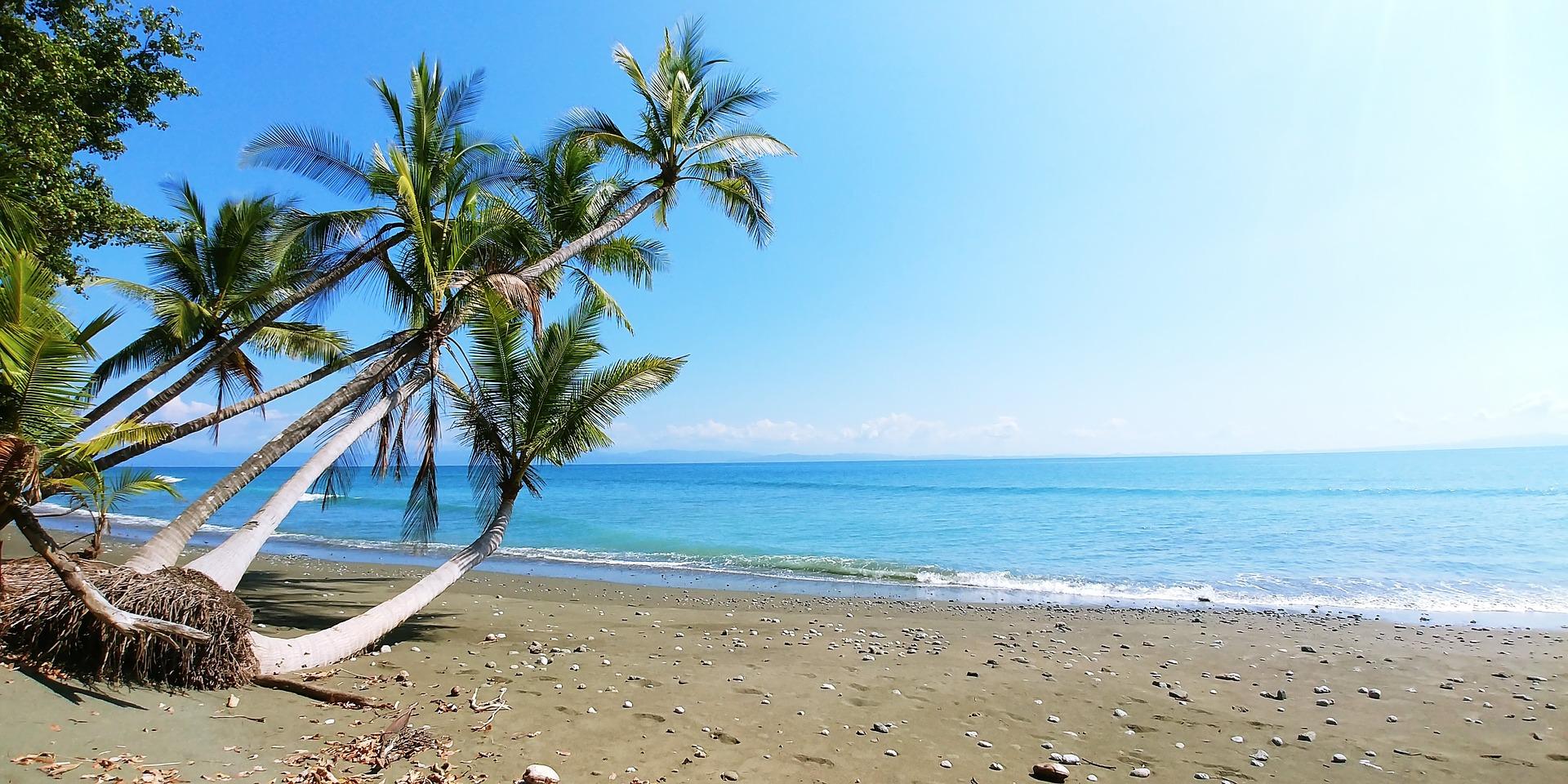 Costa Rica Plant Beach