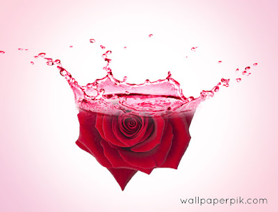 rose water effect in photoshop editor image for free download