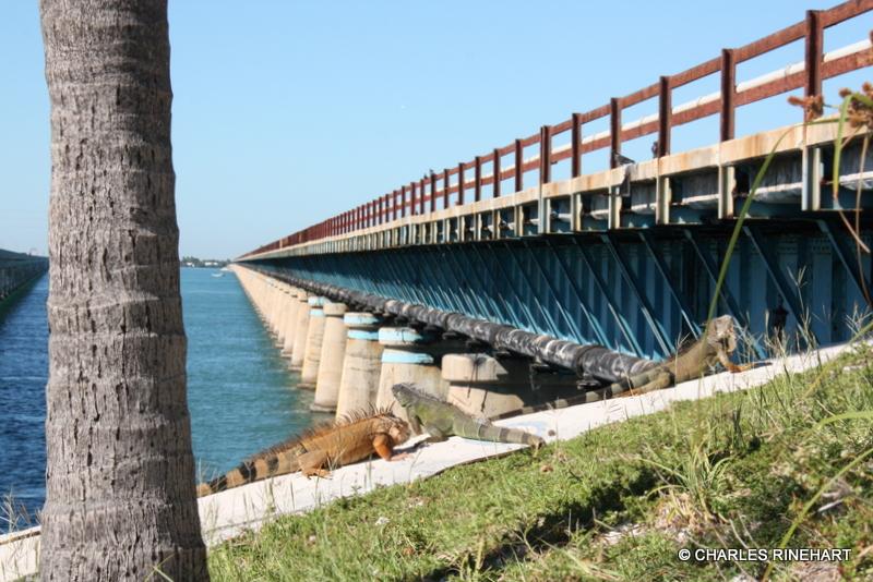 Seven Mile Bridge Old 39