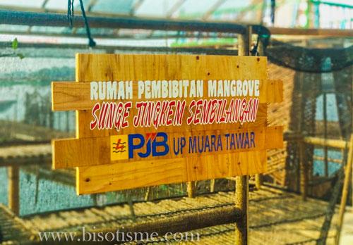 Rumah Pembibitan Mangrove Sunge Jingkem Sembilangan Bekasi