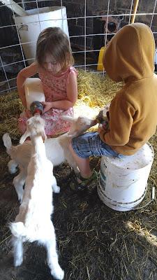 Raising Kids Who Raise Livestock