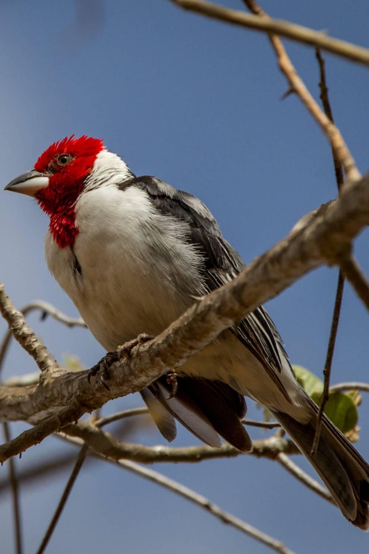 ambiente de leitura carlos romero conto luiz augusto paiva sertão galo de campina liberdade pássaros acaua