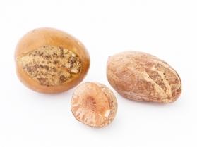 Эфирные масла от грибка ногтей применение масла орегано