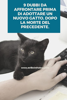 dubbi adottare gatto morte