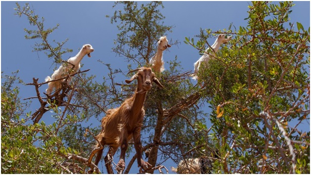 Discover The Wildlife In Morocco