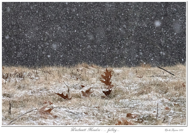 Wachusett Meadow: ... falling...