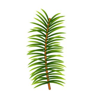 fir-branch