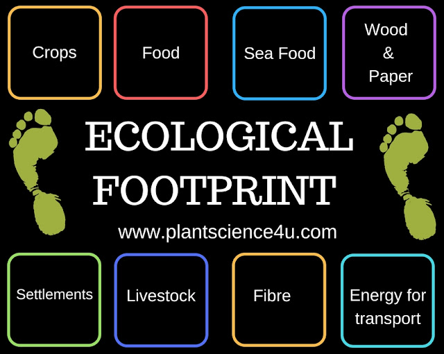 What is Ecological Footprint definition