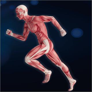 Nutrition and Exercise Strengthen Muscles Well #MyFriendAlexa #PebbleInWatersWrites #EnsureStrongerInsideOut