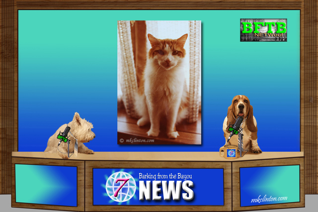 BFTB NETWoof News on distillery cats