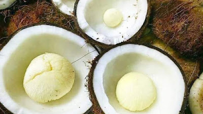 25. Manfaat Kentos kelapa pada Tubuh Manusia
