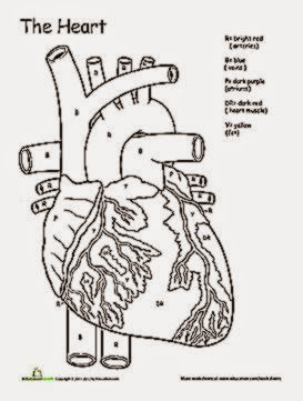Awesome Anatomy If I Only Had a Heart  Worksheet