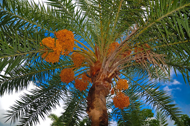 Important Hadith Which tree is like a Muslim ?