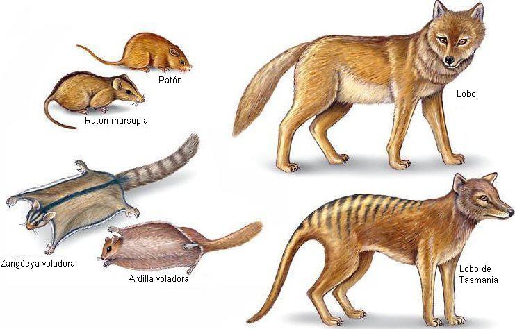 ESOTERICA: PARTICULARIDADES EN LA EVOLUCIÓN DE LAS ESPECIES